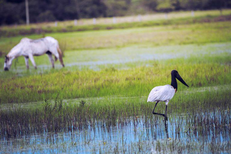 Birdwatching - Corocora Wildlife Camp in Colombia