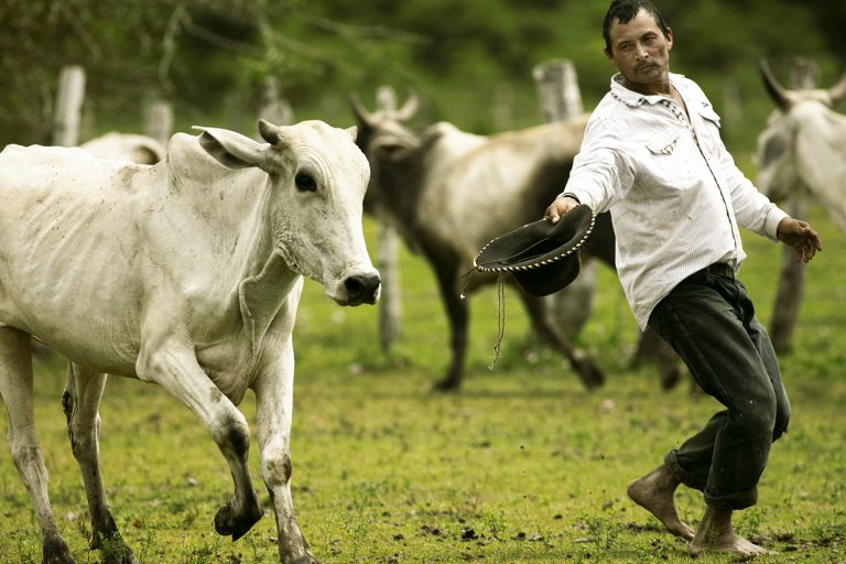 Cattle Herding and Conservation of Wildlife in Colombia