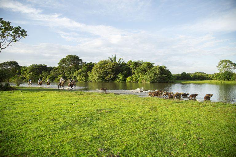 Corocora Wildlife Camp in Colombia