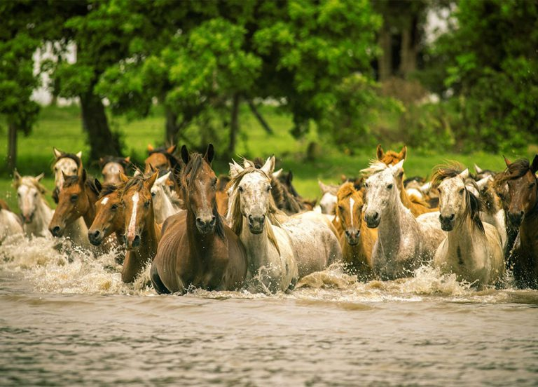 Horseback riding expeditions - Corocora Wildlife Camp in Colombia