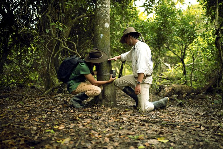 Wildlife Conservation - Corocora Wildlife Camp in Colombia